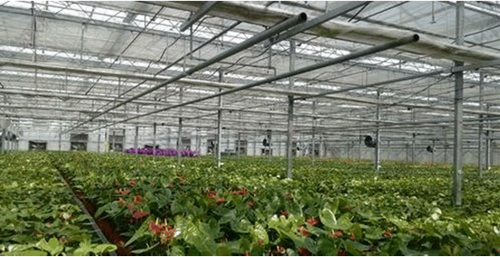 甘肃温室大棚环境监控系统,农业物联网使温室大棚种植管理智能化