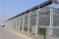 上海镀锌骨架玻璃大棚阳光房5米高、三尖顶纹络型承建企业