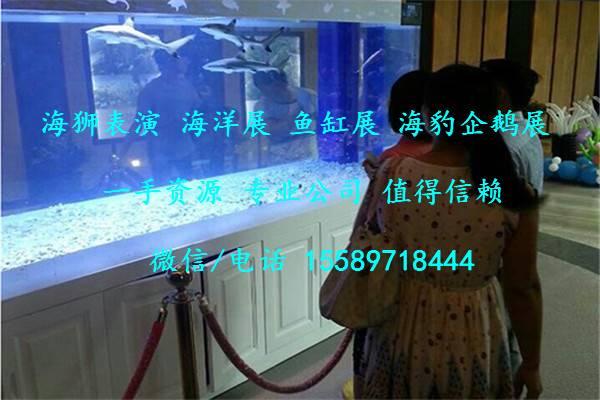 商丘市出租海洋主题展览