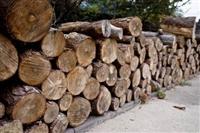 东莞红木进口报关流程