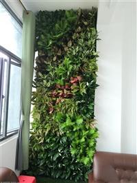 广州美居生态墙公司