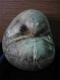 贝类化石在市场上什么价格