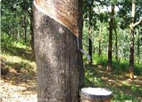越南天然橡胶进口报关基本顺序