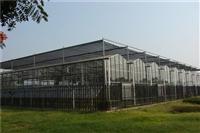 青海绿色生态玻璃温室餐厅温室酒店6000平方、轻钢纹络式建造报价