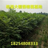 貴州香椿苗批發