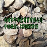 锡林浩特颠茄草生产基地