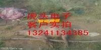 贵州野猪捕猎机12年老厂生产
