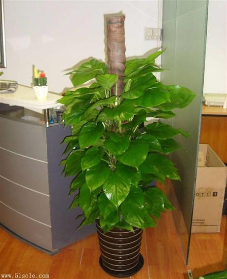 重庆植物租赁 重庆植物租摆 重庆绿植出租 重庆花卉出租 重庆植物