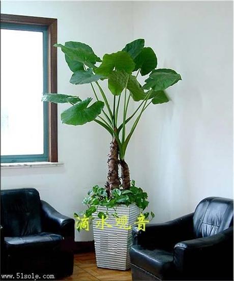 重庆江北植物租赁重庆江北绿植出租重庆植物租赁公司