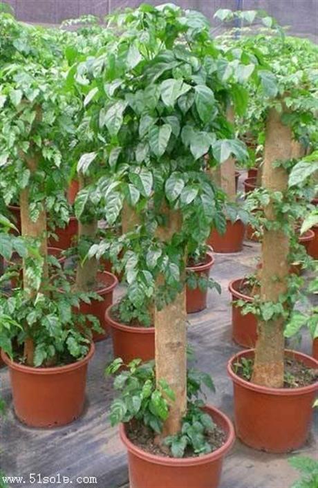 重庆大坪植物租赁重庆大坪植物租摆重庆植物租赁公司