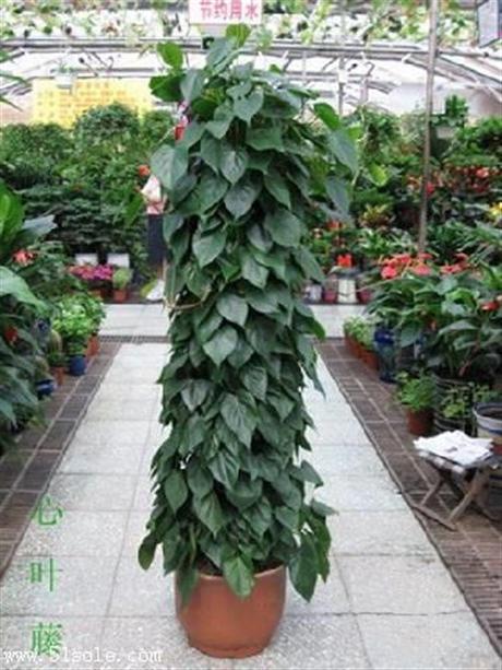 重庆大学城植物租赁 重庆大学城植物出租 重庆大学城植物租赁公司