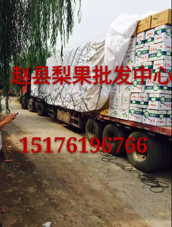 皇冠梨二级梨雪花梨产量