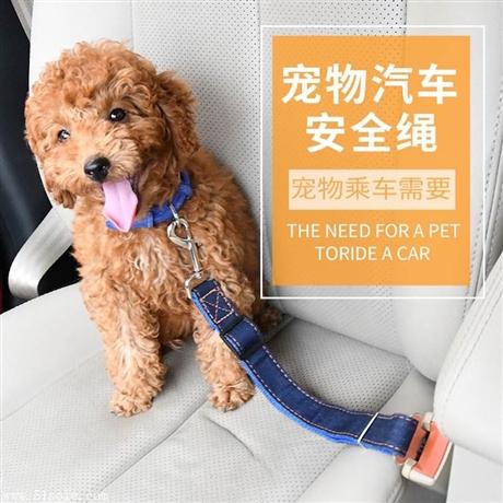 宠物用品宠物牛仔汽车安全绳