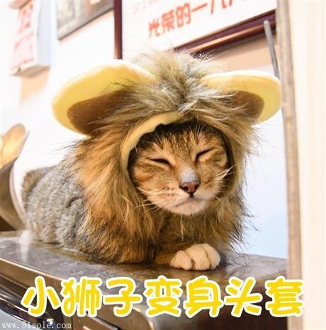 猫用品狮子变身头套