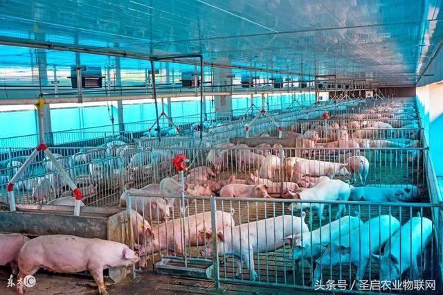 猪舍环境远程监控系统,动物养殖舍物联网控制系统