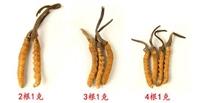 蟲草多少錢一克,冬蟲夏草產地報道