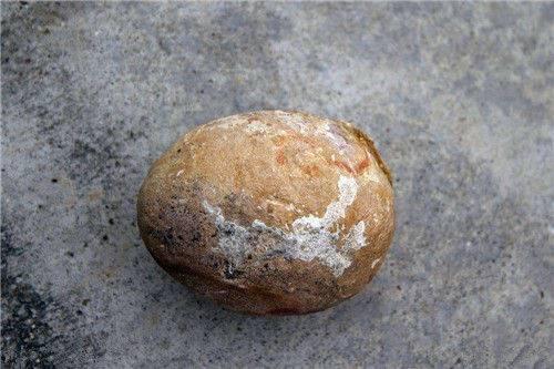 蛋化石拍卖的快          由此可见,小恐龙和小鸟一样,会本能地待在巢