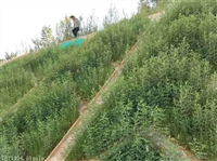 高铁路基防护草籽昆明草种经销商