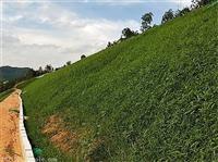 矿渣适合生长的草子百色仓库供货