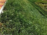提供百色市高陡山体复绿常用植物