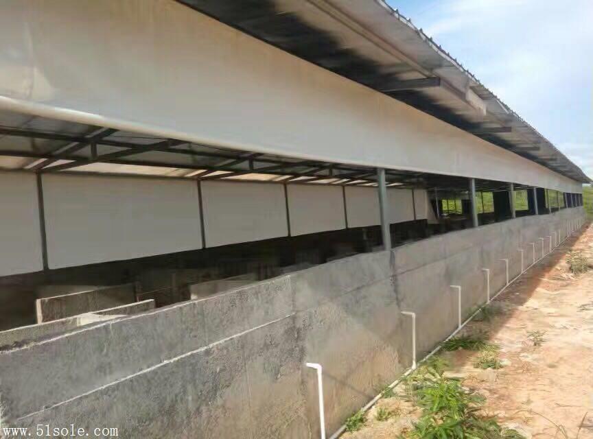 江西赣州帆布厂家 供应白色透光猪场卷帘篷布 防紫外线 保暖 PVC