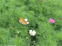 提供生态复绿复垦梧州花草种籽库