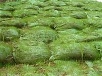 重慶市開縣專賣邊坡常用綠網袋