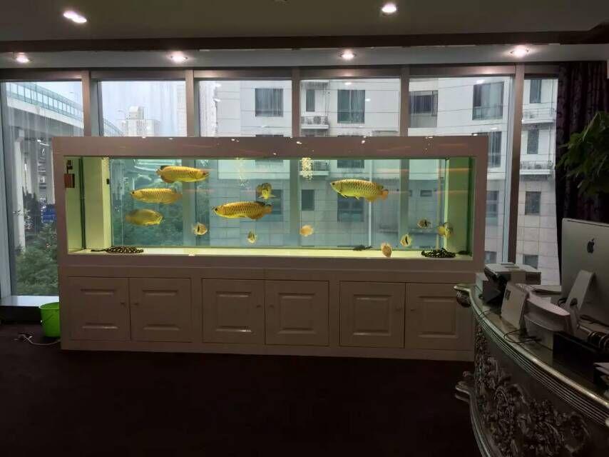 广州办公室风水鱼缸设计,广州订做鱼缸厂家