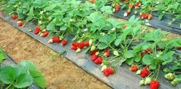 果园专用防草布一亩地大约多少钱