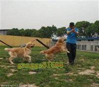 怎么训练小狗