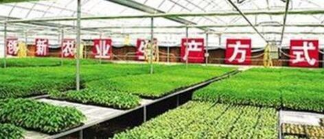 农业产业供应链的真实当下与可能未来