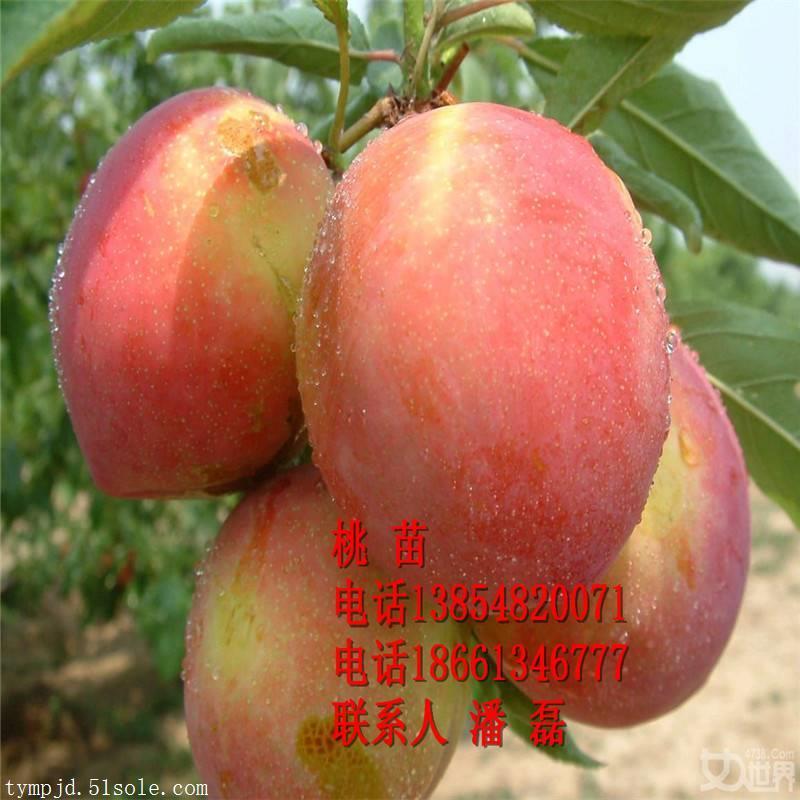 桃树苗价格、桃树苗价格多少