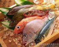 日本三文鱼进口报关材料