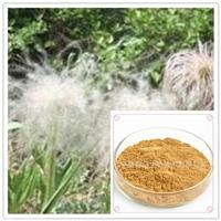 白头翁提取物10:1白头翁浸膏粉 专业提取 白头翁速溶粉规格可定制