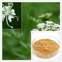 床子提取物10:1规格提取 蛇床子素 现货供应 量大从优床子浸膏粉