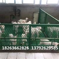 塑料羊漏粪板  加固型羊床  山东羊床生产厂家