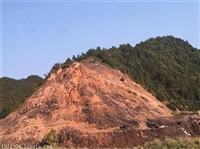 边坡草种灌木提供梧州总部发货