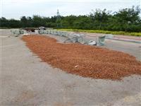 毛桃胡种子基地