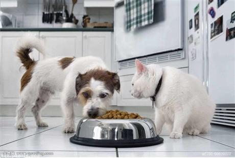 首次进口国外宠物粮到中国.有哪些清关手续流程