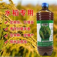 种植水稻使用微生物菌剂的优势