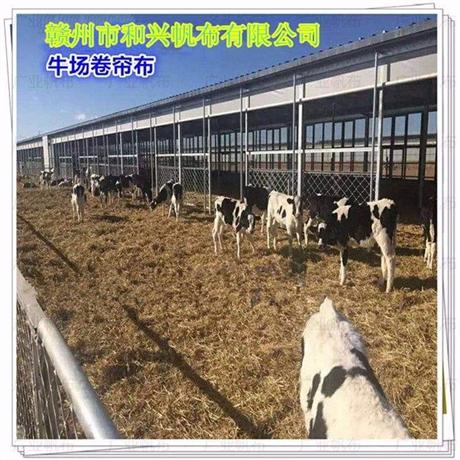 现代养牛场设备价格 牛场卷帘布定做 牛场冬天保暖防风设备