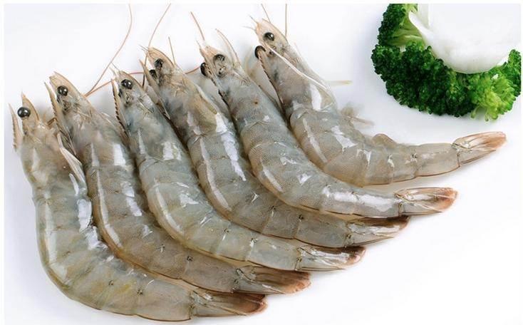 青岛进口南美白虾所需资料