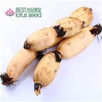 鲜粉莲藕速冻保鲜冷冻 脆甜菜藕 高维生素高营养低热量 产地批发