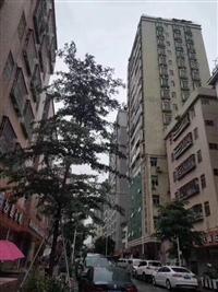 深圳集资房出售 民治深港华庭 均价12800一平 精装分期3年