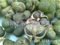 茶树种子 种植方法 茶叶种子批发 信阳茶叶籽基地供应商