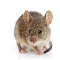 西安高陵滅鼠公司 高陵滅蟑螂公司 高陵滅鼠滅蟑螂公司哪家好
