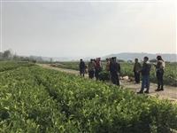 供应四川柑橘苗价格