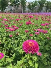 十月开花草花种子品种齐全