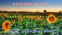 黄芩种子如何种植-衢州黄芩种子