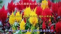 進口紫花苜蓿種子什么價-甘南護坡草種子
